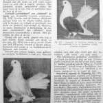 Peterfi Stefan - Cresterea porumbeilor (166)