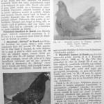 Peterfi Stefan - Cresterea porumbeilor (167)