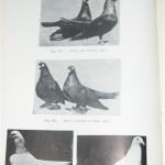 Peterfi Stefan - Cresterea porumbeilor (170)