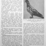 Peterfi Stefan - Cresterea porumbeilor (171)