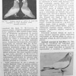 Peterfi Stefan - Cresterea porumbeilor (174)