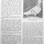 Peterfi Stefan - Cresterea porumbeilor (175)