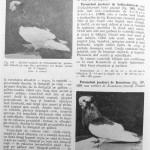 Peterfi Stefan - Cresterea porumbeilor (176)