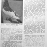 Peterfi Stefan - Cresterea porumbeilor (177)