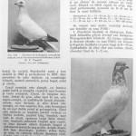 Peterfi Stefan - Cresterea porumbeilor (182)