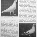 Peterfi Stefan - Cresterea porumbeilor (183)