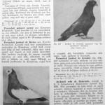 Peterfi Stefan - Cresterea porumbeilor (185)