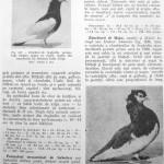 Peterfi Stefan - Cresterea porumbeilor (187)