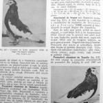 Peterfi Stefan - Cresterea porumbeilor (188)