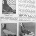 Peterfi Stefan - Cresterea porumbeilor (189)