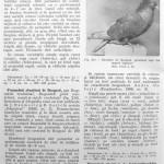 Peterfi Stefan - Cresterea porumbeilor (190)