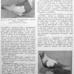 Peterfi Stefan - Cresterea porumbeilor (191)