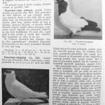 Peterfi Stefan - Cresterea porumbeilor (194)
