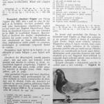 Peterfi Stefan - Cresterea porumbeilor (195)