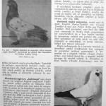 Peterfi Stefan - Cresterea porumbeilor (199)