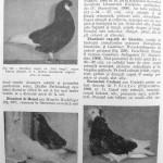 Peterfi Stefan - Cresterea porumbeilor (200)