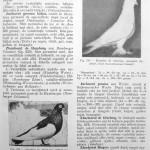 Peterfi Stefan - Cresterea porumbeilor (203)