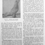 Peterfi Stefan - Cresterea porumbeilor (204)