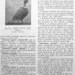 Peterfi Stefan - Cresterea porumbeilor (207)