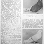 Peterfi Stefan - Cresterea porumbeilor (209)
