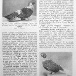 Peterfi Stefan - Cresterea porumbeilor (211)