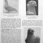 Peterfi Stefan - Cresterea porumbeilor (215)