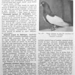 Peterfi Stefan - Cresterea porumbeilor (216)