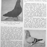 Peterfi Stefan - Cresterea porumbeilor (218)
