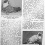 Peterfi Stefan - Cresterea porumbeilor (220)