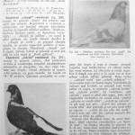 Peterfi Stefan - Cresterea porumbeilor (221)