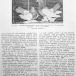 Peterfi Stefan - Cresterea porumbeilor (223)