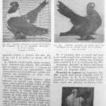 Peterfi Stefan - Cresterea porumbeilor (224)