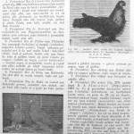 Peterfi Stefan - Cresterea porumbeilor (226)