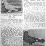 Peterfi Stefan - Cresterea porumbeilor (227)