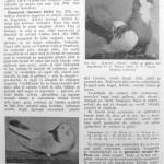 Peterfi Stefan - Cresterea porumbeilor (228)