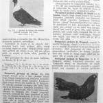 Peterfi Stefan - Cresterea porumbeilor (230)