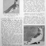 Peterfi Stefan - Cresterea porumbeilor (231)