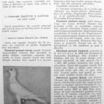 Peterfi Stefan - Cresterea porumbeilor (232)