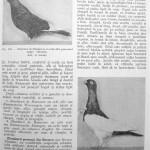 Peterfi Stefan - Cresterea porumbeilor (233)