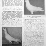 Peterfi Stefan - Cresterea porumbeilor (236)