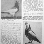 Peterfi Stefan - Cresterea porumbeilor (237)