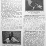 Peterfi Stefan - Cresterea porumbeilor (238)