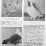 Peterfi Stefan - Cresterea porumbeilor (240)
