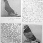 Peterfi Stefan - Cresterea porumbeilor (241)