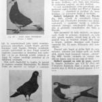 Peterfi Stefan - Cresterea porumbeilor (242)