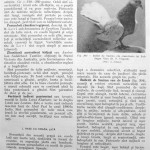 Peterfi Stefan - Cresterea porumbeilor (243)