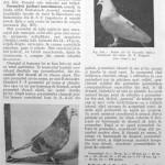 Peterfi Stefan - Cresterea porumbeilor (245)