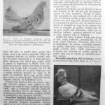 Peterfi Stefan - Cresterea porumbeilor (248)