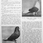 Peterfi Stefan - Cresterea porumbeilor (250)