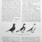Peterfi Stefan - Cresterea porumbeilor (25)